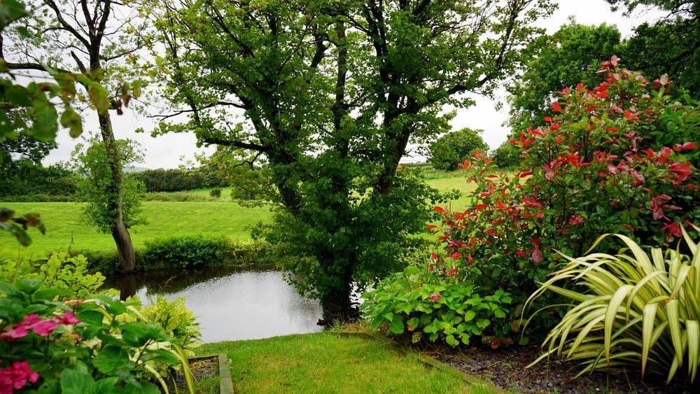 Backyard with a Pond