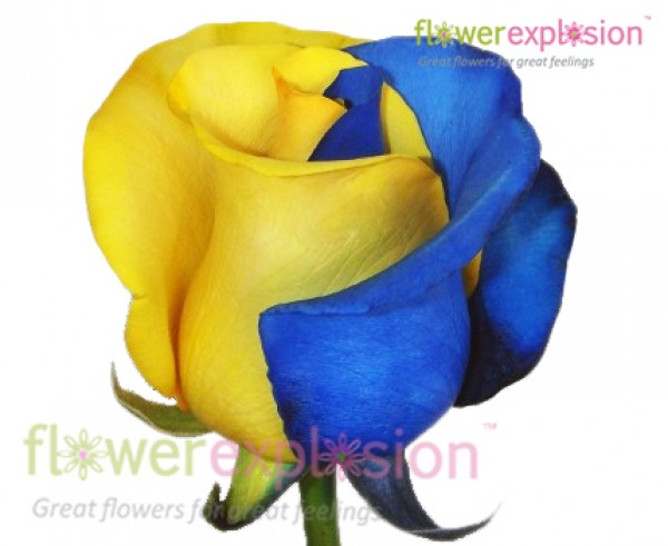 yellow and blue tinted