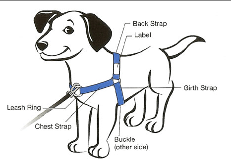 harness for mini-size dogs (SENSE-ation® brand) on Storenvy