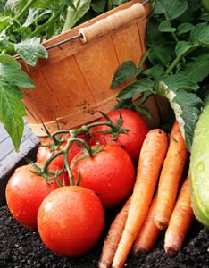 Garden planting guide vegetable choosing seed varieties also urban farmer seeds rh ufseeds