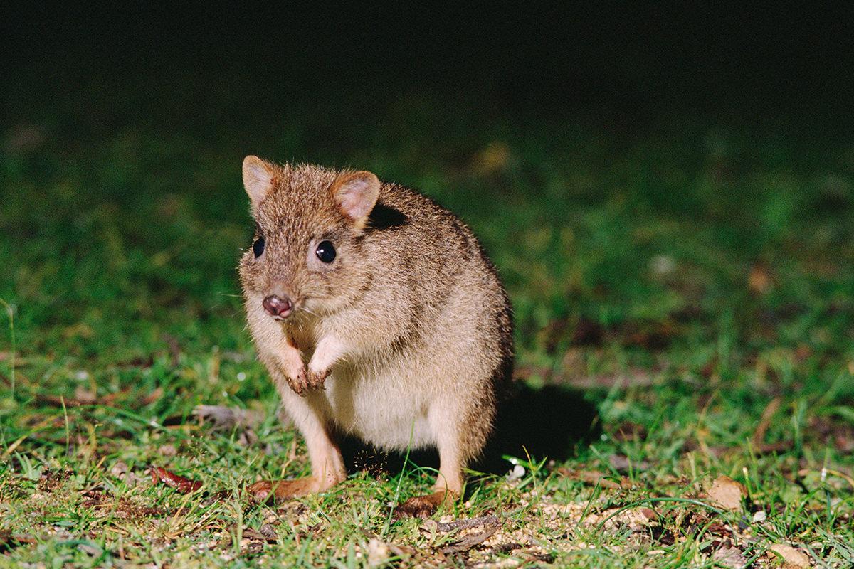 Saving Endangered Animal Worksheet