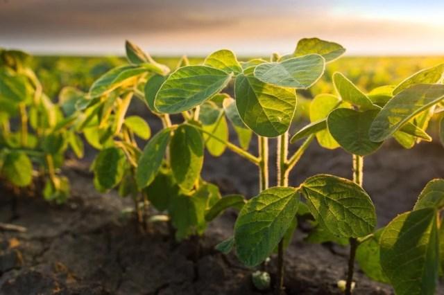 Zastosowania rolnicze nanowłókien