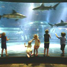 Oklahoma Aquarium - Oklahoma' Official
