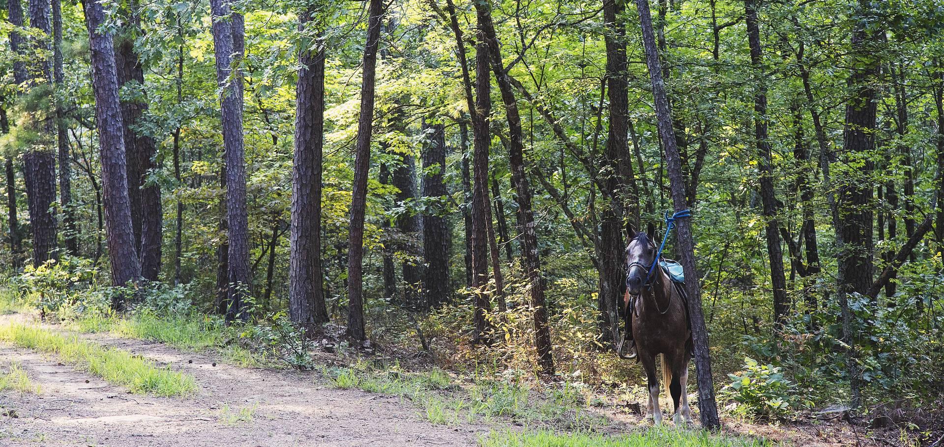 Equestrian and Horseback Riding  TravelOKcom  Oklahoma