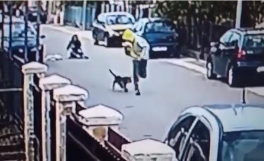 Resultado de imagen para imagenes huyendo de un perro