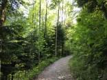 Wildnispark Zurich, Forest