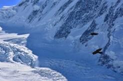 Birds are flying over the Gorner Glacier