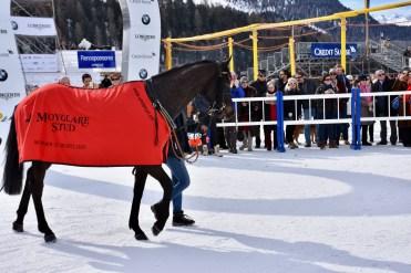 White Turf 2017, St. Moritz, Footprintinthesand is the winner of the flat race GP Moyglare Stud