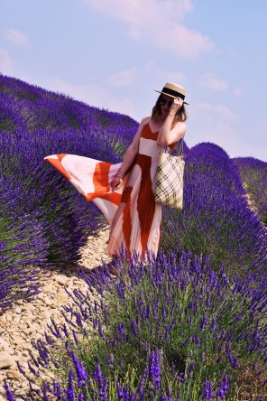 Lavender fields of Provence