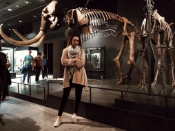 Zurich Museums Night, Palaeontological Museum of the University of Zurich