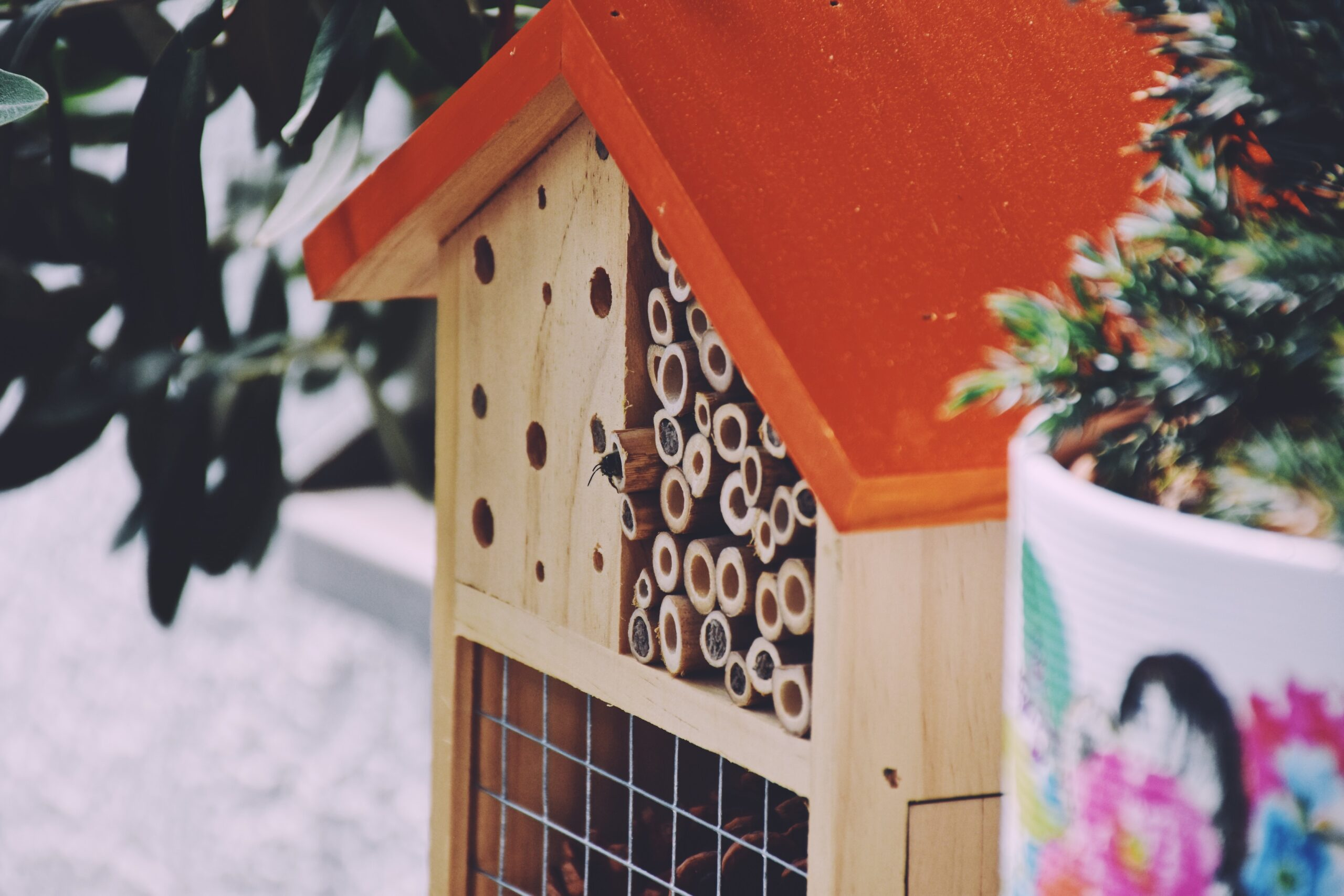 Mason Bees at the bee-hotel in the urban garden