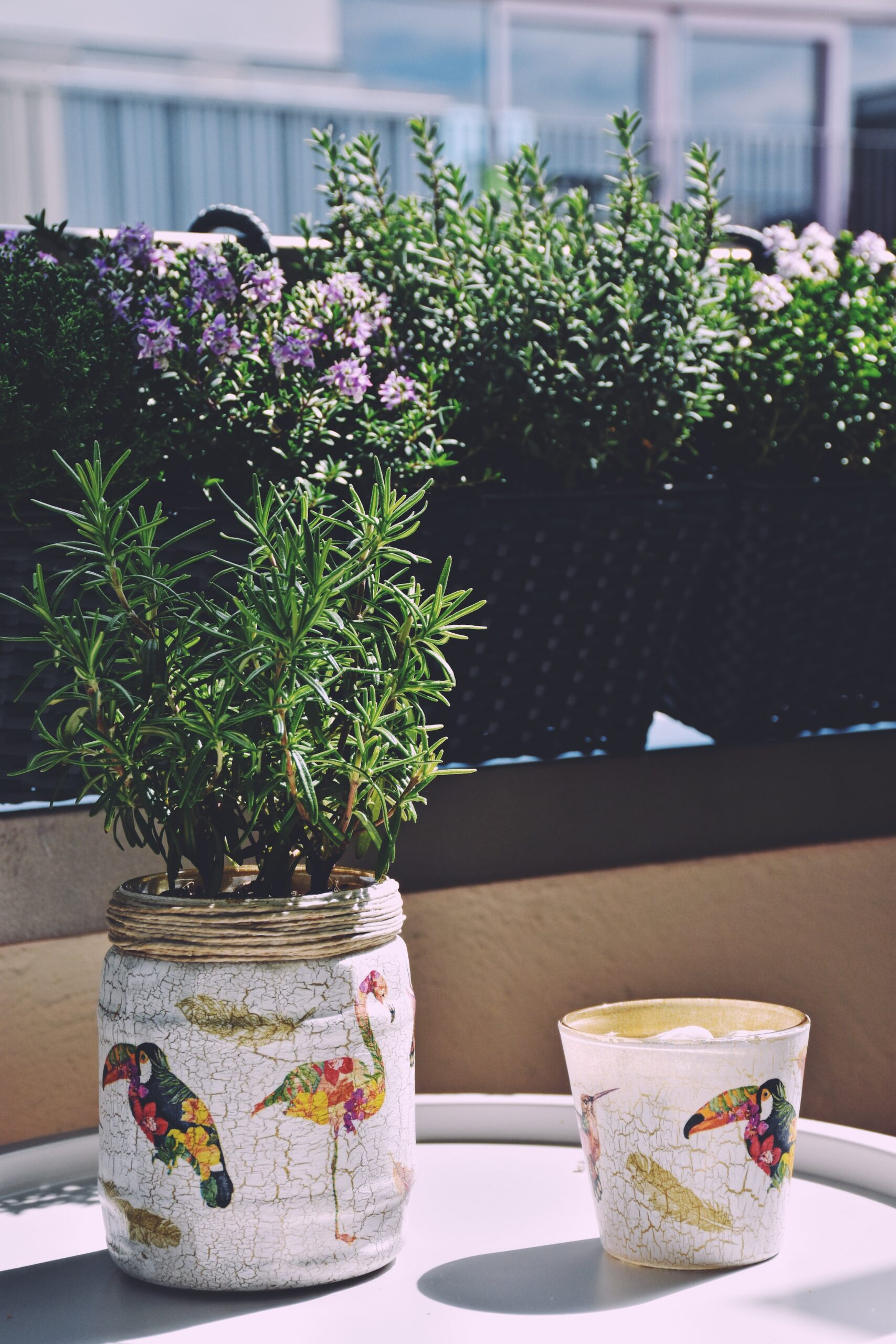 Upcycled glass jars as flower pots in the urban garden