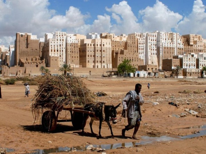 A yemeni man pulls a donkey cart full of grass past the 500-year-old skyscrapers of Shibam across puddles in the daytime