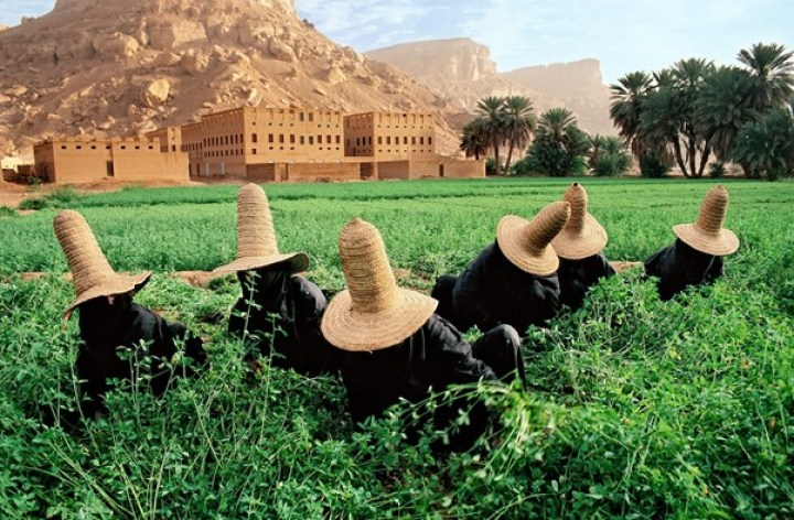 Women gather clover in the green field outside Shibam in their black abbayas. Their peaked straw hats, called madhalla, are designed to keep their heads cool in searing desert temperatures. P