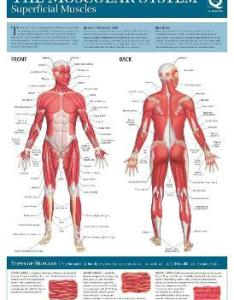 Human anatomy wallchart also quad books rh bookdepository