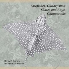 Ray And Skate Diagram Do It Yourself House Wiring Sawfishes Guitarfishes Skates Rays Chimae Part 2 Henry B