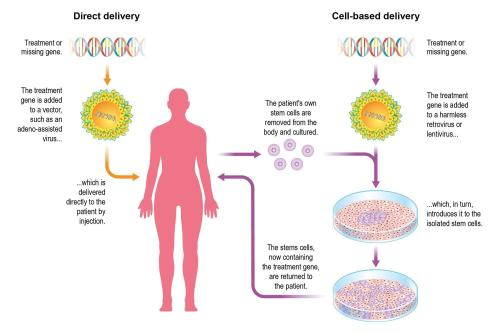 small resolution of gene diagram