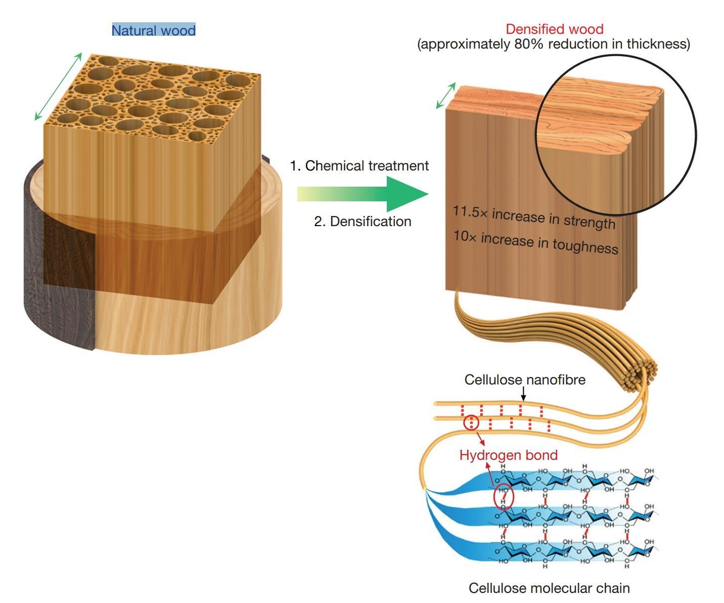 hight resolution of  bullet proof wood developed research chemistry world