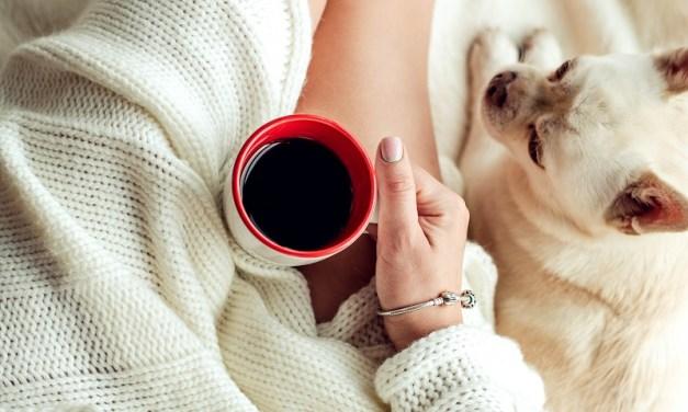 Cuidados com os cachorros no inverno