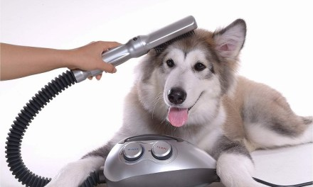 Dicas para higienizar uma casa com pets