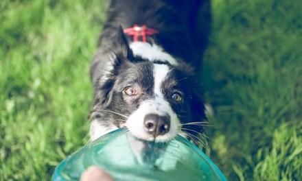Atividades para fazer com o cachorro