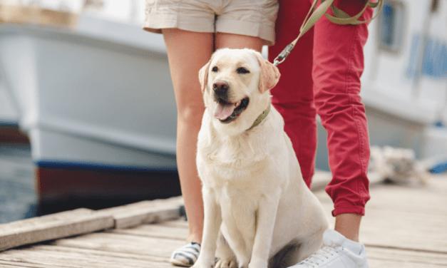 Como escolher a coleira para cachorro ideal