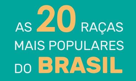 20 raças de cachorro mais populares do Brasil