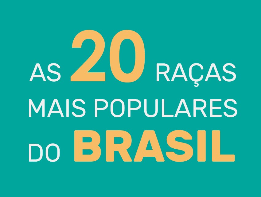 As raças de cachorro mais populares do Brasil
