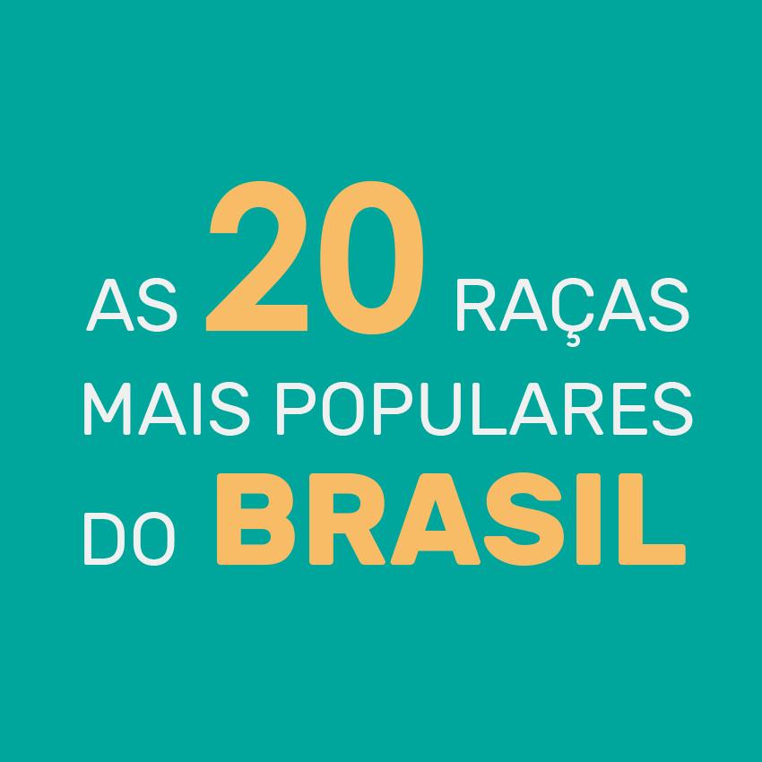20 raças de cachorro mais populares do Brasil - Pesquisa exclusiva com 100.000 cães cadastrados na DogHero - Blog DogHero