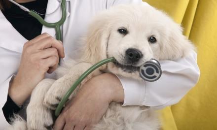 Garantia veterinária: como acionar, regras e prazos