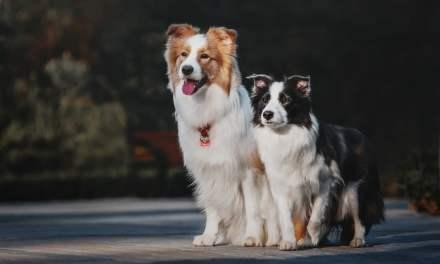 Os 200 nomes de cachorro macho mais populares do Brasil!