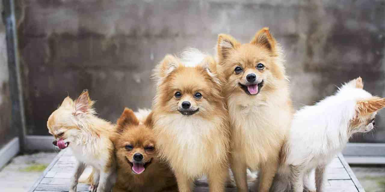Nomes de cachorro fêmea: os 100 mais populares do Brasil