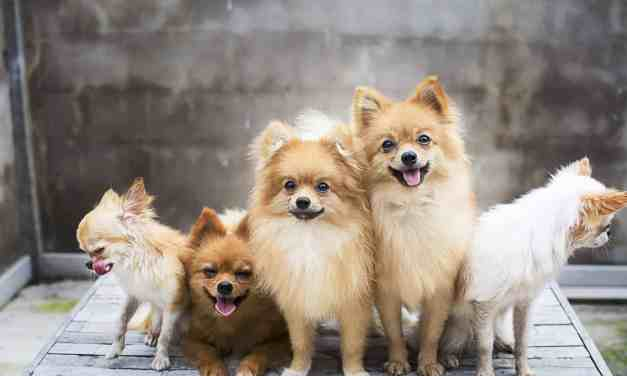 Os 200 nomes de cachorro fêmea mais populares do Brasil!