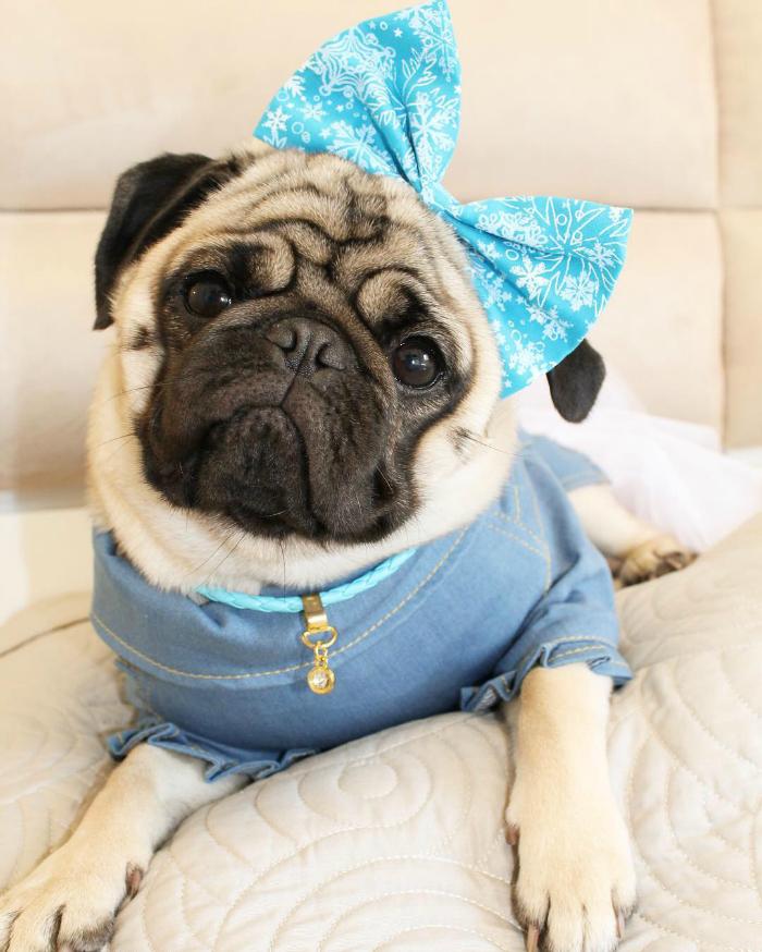 olgapugdog-doghero