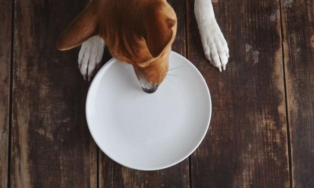 Petisco para cachorro: opções naturais e o que evitar