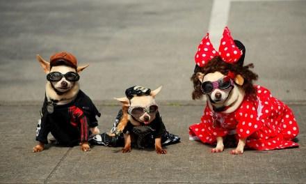 Carnaval: prepare-se para as hospedagens do feriado!