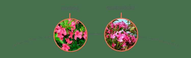 plantas-toxicas-para-caes-2