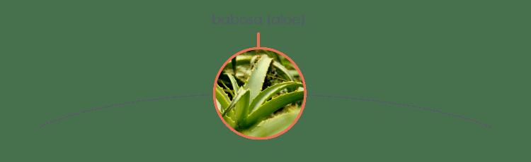 Plantas tóxicas para cães: babosa (aloe)