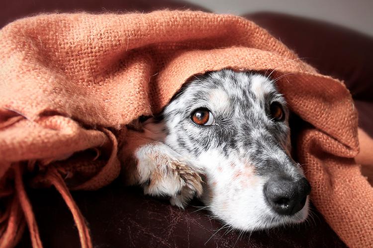Mi perro vomitó: ¿qué hacer? La veterinaria de DogHero explica por qué el perro la pasa mal, lo que debés observar y cuándo vale la pena llevarlo al hospital.