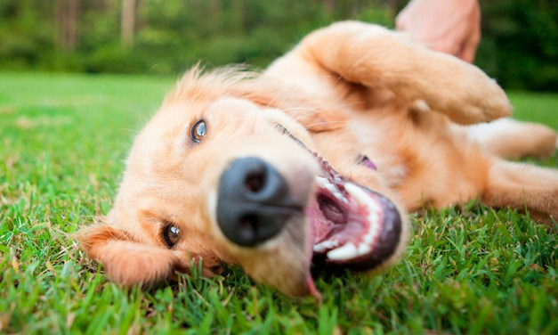 Por que meu cachorro come grama? Tem problema?