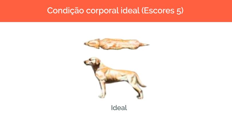 cachorro-gordo-2