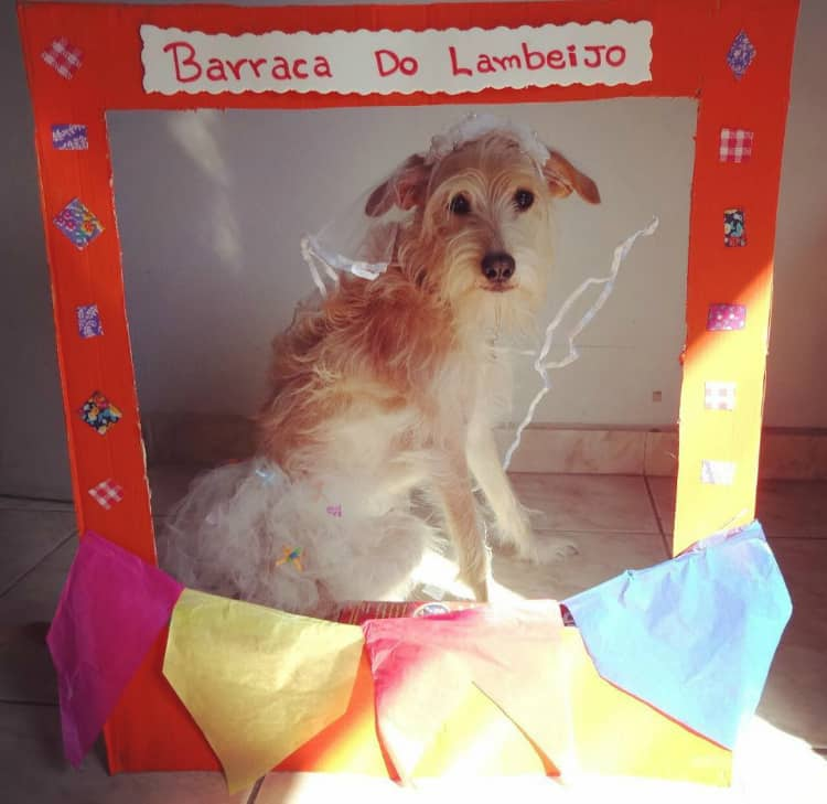 Arraiá Canino: 14 fotos de cães prontos pras festas juninas - DogHero for dog lovers <3