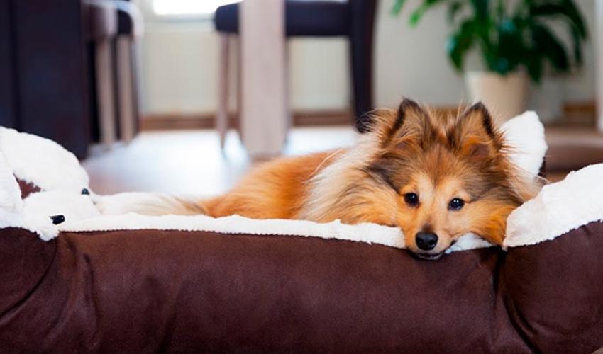 Cachorro a caminho: o que comprar para o peludo que vai chegar