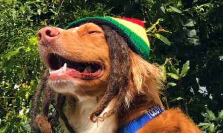 DogHero nas férias: vem cantar com a gente o reggae do au-mor!