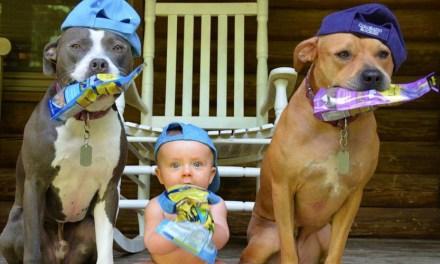 Cães + crianças: os 10 perfis mais fofos do Instagram!