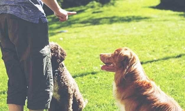 Como fazer o adestramento de cães em casa