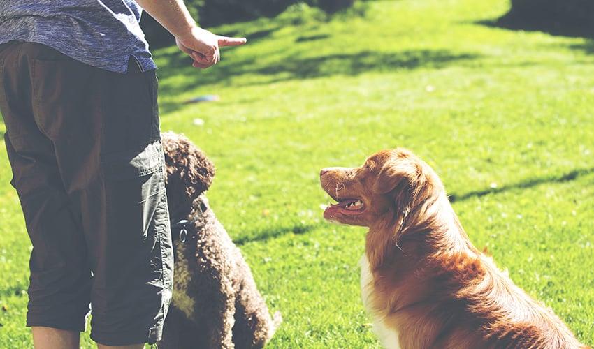 Adestramento de cães: truques para educar o pet em casa