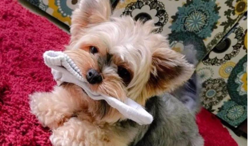 InstaDog: as 10 fotos de cachorro mais curtidas de novembro