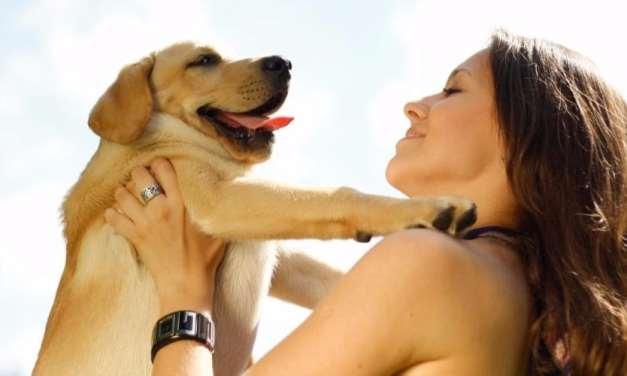 Quero hospedar meu cachorro na DogHero: como faz?