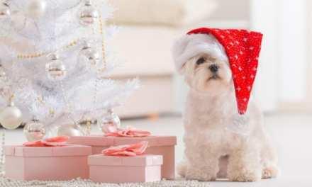 Então é Natal: 10 cachorros mostram a realidade das festas